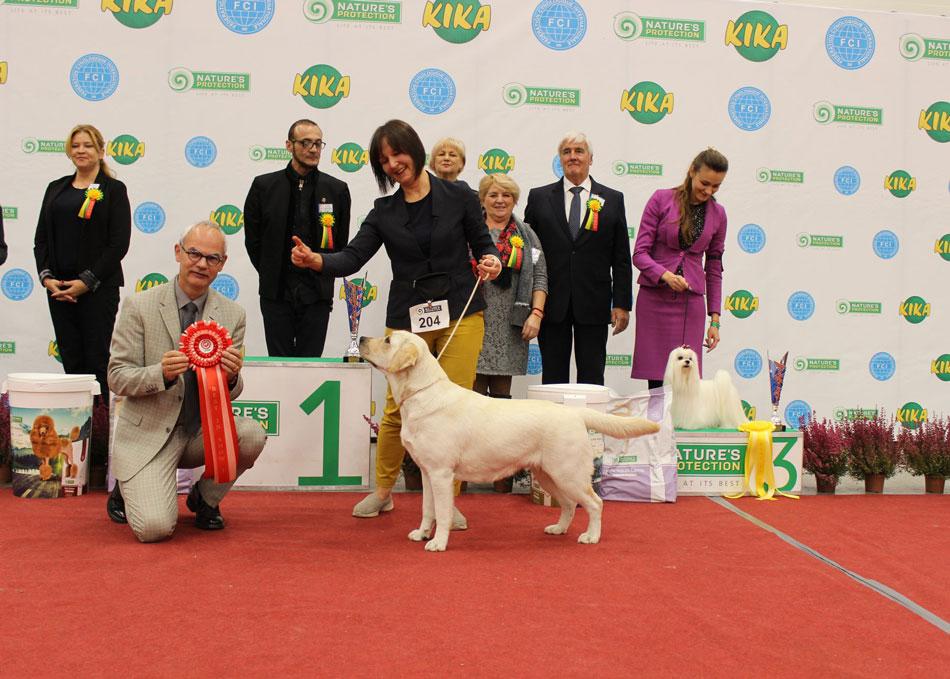"""Our Labrador Tango Šaltinis at Dog show """"Akademijos taurė"""""""