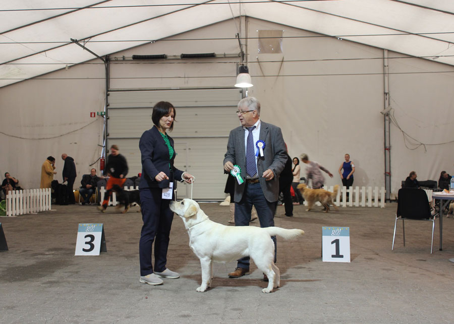 Our labrador Tango Šaltinis was evaluated as Best In Show 2