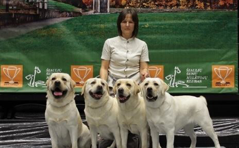 Labas Su labrador pack at a Dog Show